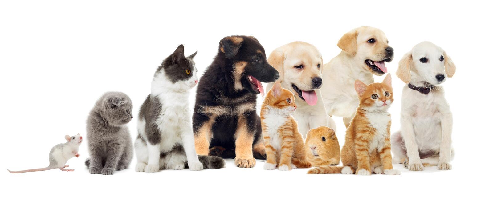 MEV-211 Enfermedades infecciosas de los animales domésticos