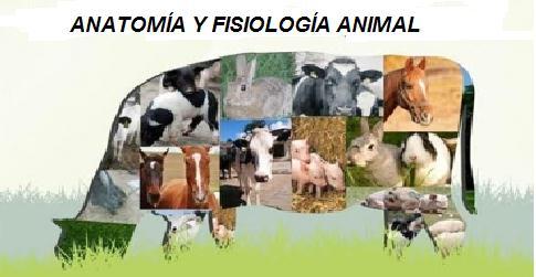INA-160 Anatomía y fisiología Animal