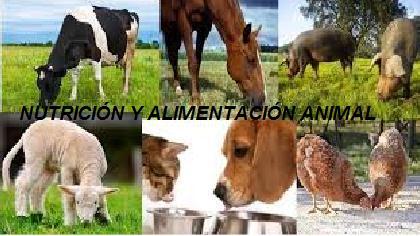 INA-161 Nutrición y Alimentación Animal