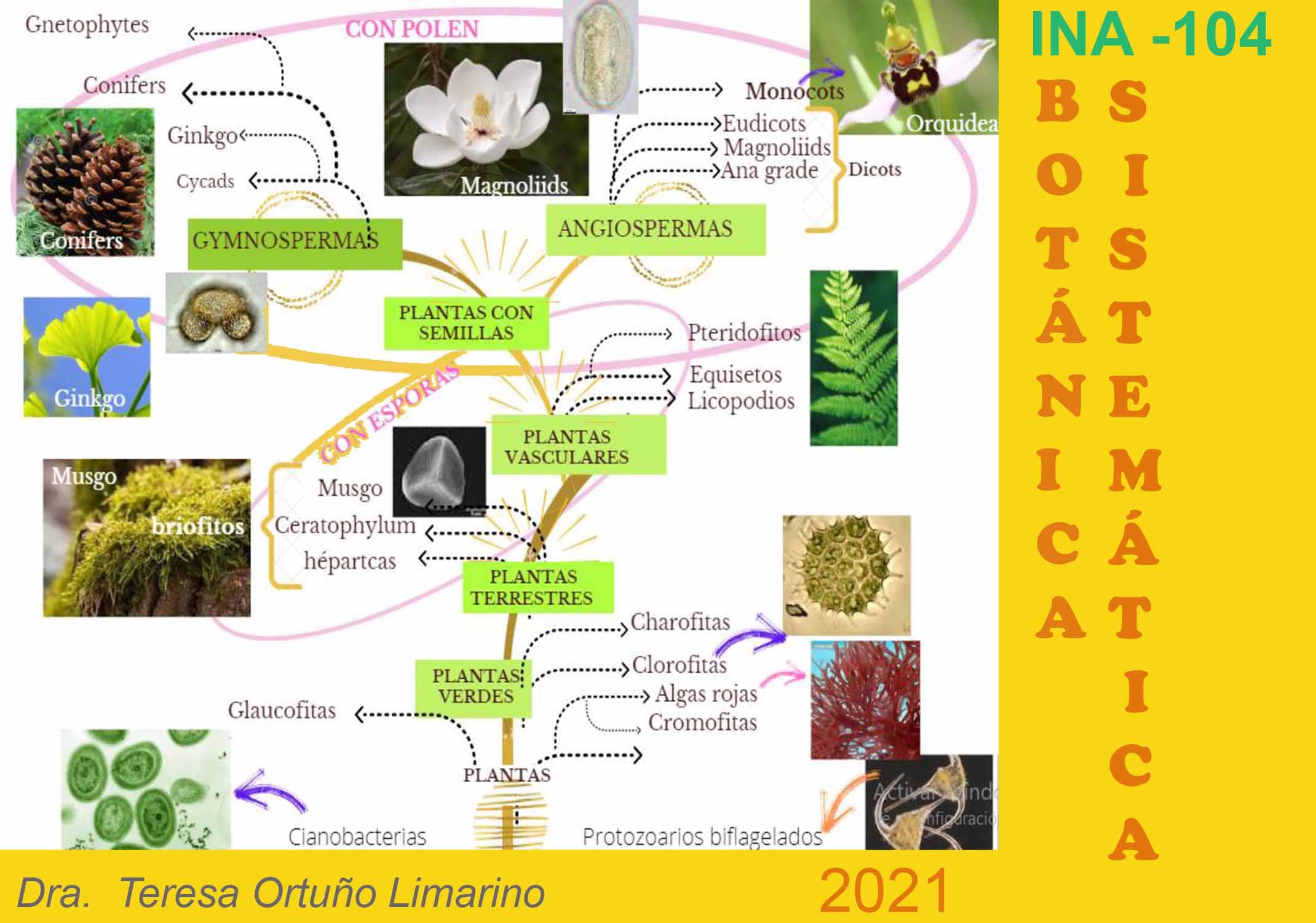 INA-104 Botánica Sistemática